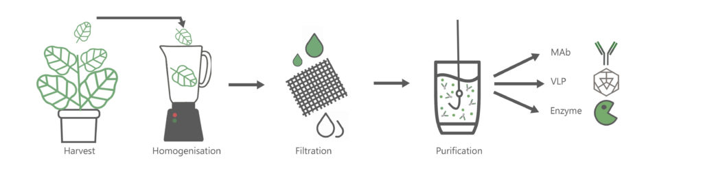 Recombinant protein separation process